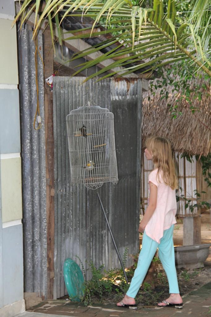 Fåglar i burar hängde överallt. Det fanns också en tävlingsarena för tuppfighter. Tupparna var burade en och en. Hönsen och kycklingarna gick friare